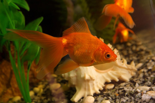 aquarium feng shui tips