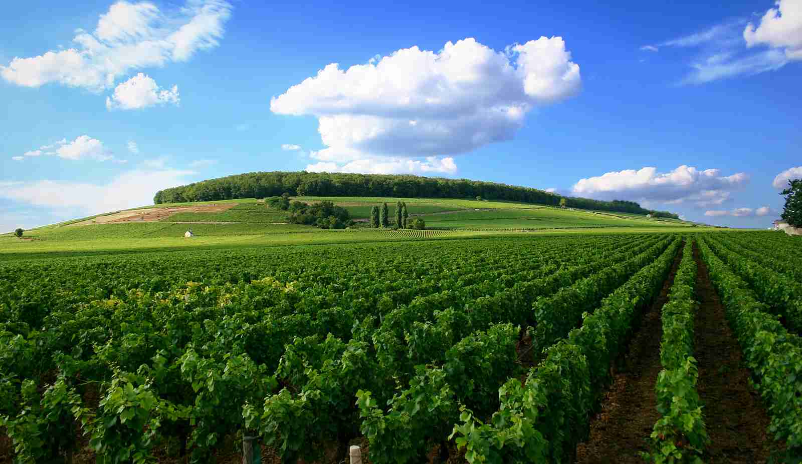 places to visit Bordeaux Vineyards, France