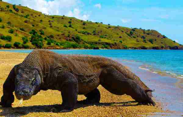 places to visit Komodo Island, Indonesia