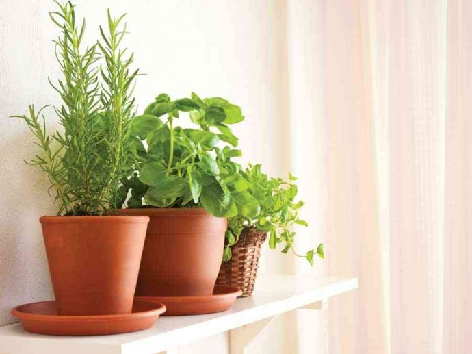 Herb Gardening Tips for Your Kitchen